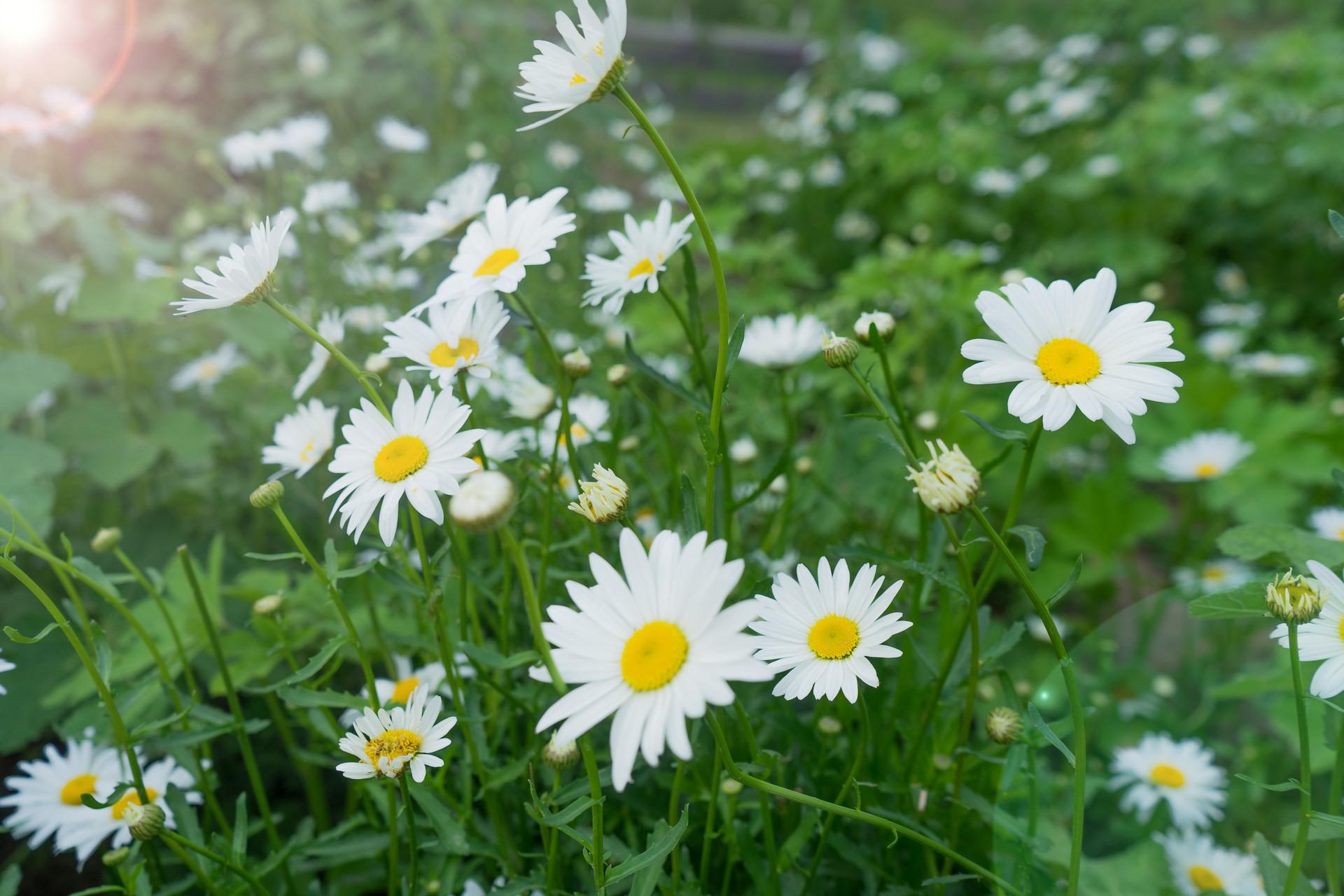 摄图网_501294306_banner_阳光下的花卉(企业商用).jpg